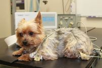 ECG For Your Pets