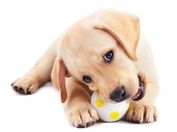puppy-with-ball