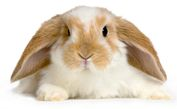 rabbit-on-white-background