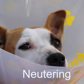 Pet neutering and spaying