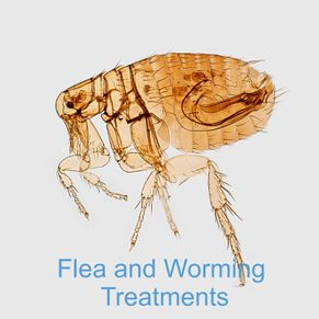 Flea and worming treatment